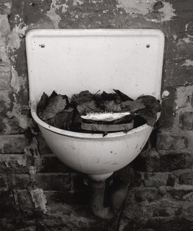 Trockenfisch, 1980