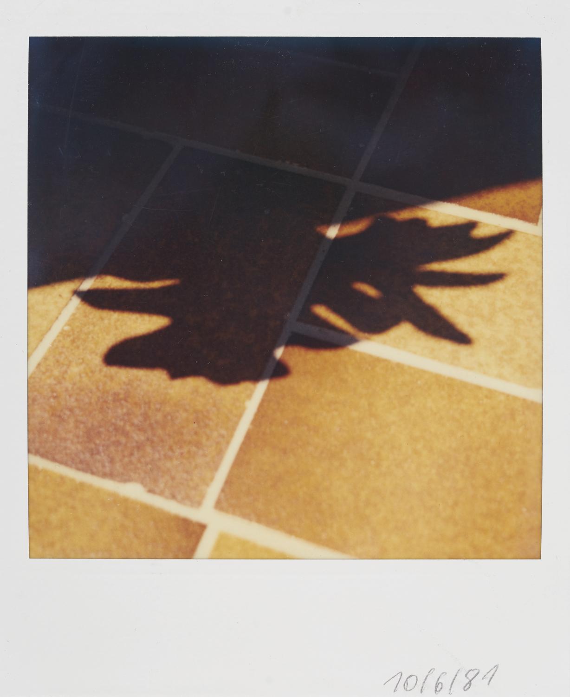 008_Polaroids1981